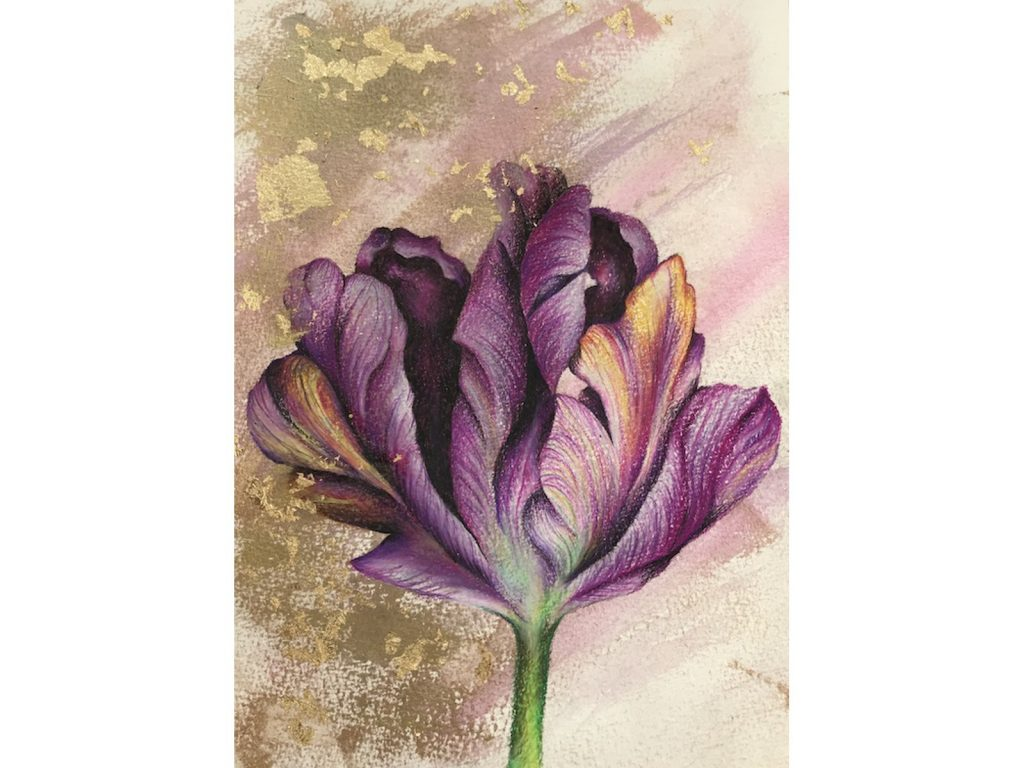 Tulip Drawing 1